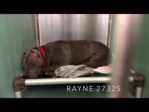 RAYNE 27325 snoozes and snores 😴 NYCACC