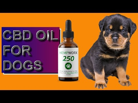 cbd-oil-for-dogs---should-you-give-cbd-oil-to-dogs?