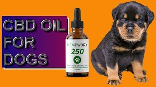CBD Oil For Dogs - Should You Give CBD Oil to Dogs?