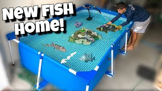 moving-all-my-fish-into-pool-pond-2-new-fish