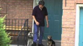 Alpha Paws - Dog Obedience Training Video Guide
