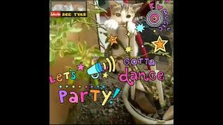 lets dance!!!
