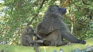 Best of Kenya Wildlife Photo Safari - Day 5 - September 1, 2017 - Lake Nakuru to Lake Naivasha