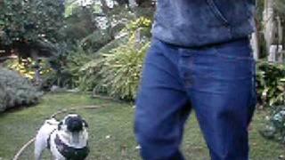 Pug Jumps. Pug Fails. Pug Attacks!