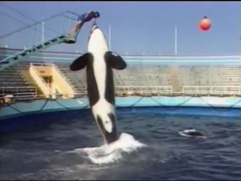 The Marineland Adventure (1984)