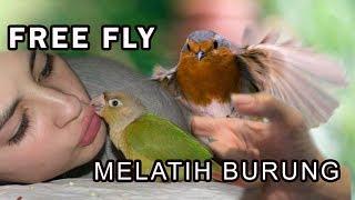 Melatih Burung Free Fly