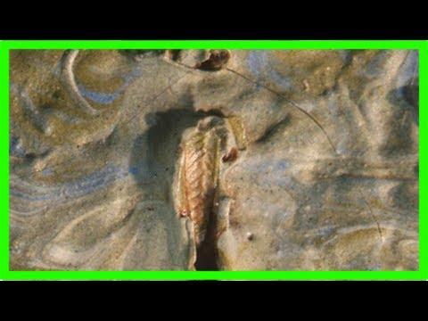 Grasshopper found embedded in 130-year-old van gogh masterpiece