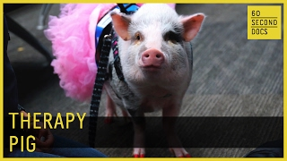Therapy Pig // 60 Second Docs