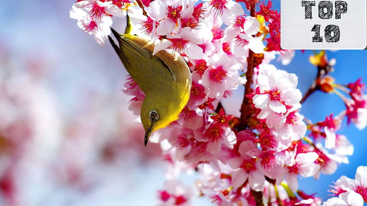 World most beautiful flower hd image matatarantula top 10 most beautiful flowers in the world you izmirmasajfo
