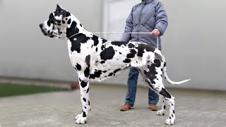 These Are 10 Indian Dog Breeds