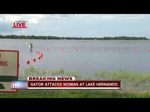 Gator attacks woman in Citrus County, trappers on scene