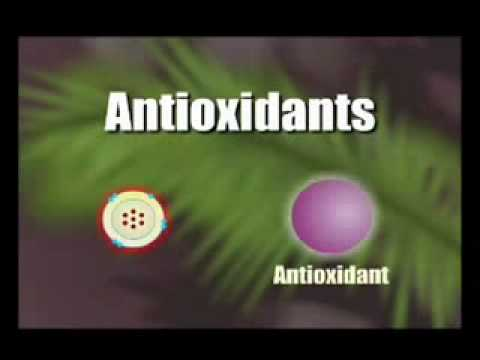 How Antioxidants work 1.flv