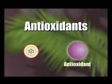 How Antioxidants work 1.flv