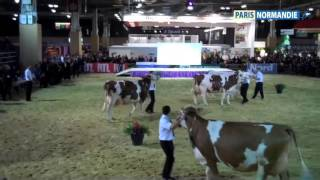 Salon de l'agriculture : les brayons jugent le bétail