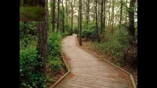 Фото слайд-шоу Дороги на природе. Часть 2.