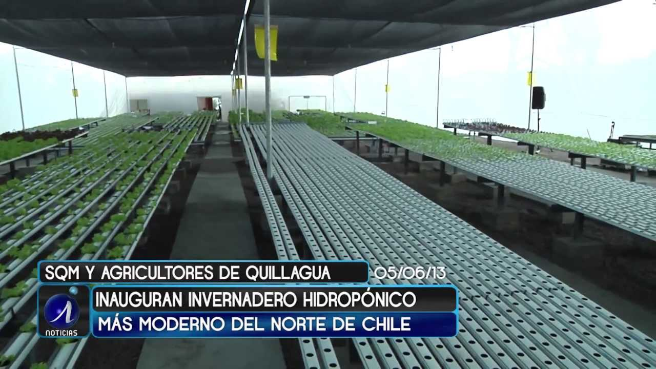 Sqm inaugura invernadero hidrop nico en quillagua for Construccion de viveros e invernaderos