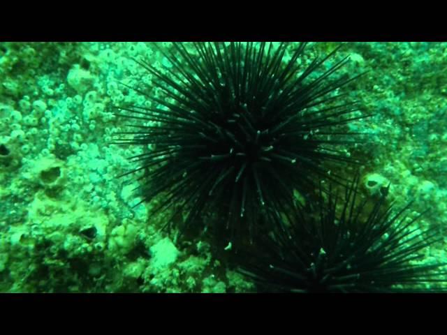 Jetty Dive - Panama City, FL
