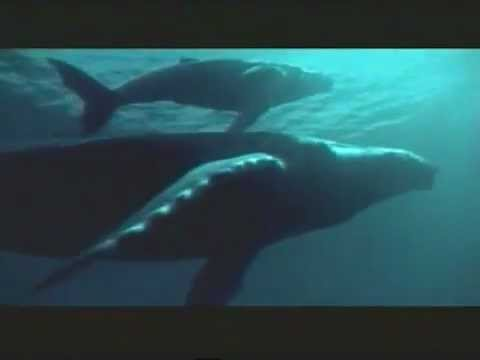 IFAW -Song of the Whales-