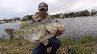 TOP 3 HUGE LARGEMOUTH BASS CAUGHT ON CAMERA! (compilation)