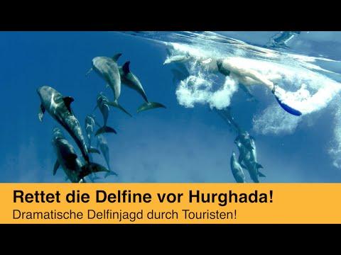 Delfinquälerei im Roten Meer! Touristen sollen nicht mit Delfinen schwimmen