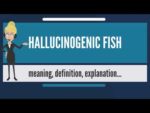 What Is HALLUCINOGENIC FISH? What Does HALLUCINOGENIC FISH Mean? HALLUCINOGENIC FISH Meaning