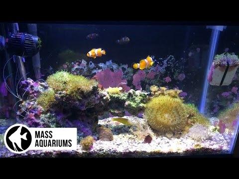 10 gallon Nano Reef Tank: 2+ Years/Nualgi Experiment.
