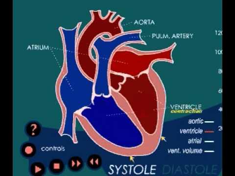 Herz 3 4