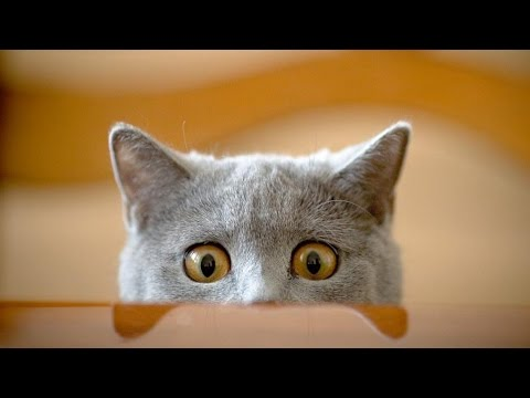 The Funniest Cat Compilation (MUST SEE) Try Not To Smile