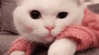 One Cool Cat! - Chiropractic and Massage - Funny Animals