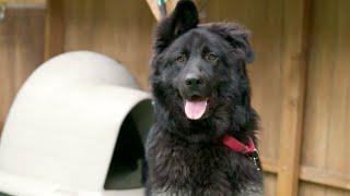 Brandon McMillan Trains a Therapy Dog