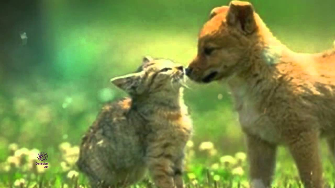 صور حيوانات للأطفال Animal Pics For Children