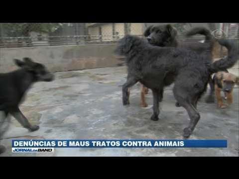 Crescem denúncias de maus tratos contra animais