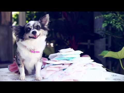 Как проходит течка у собак