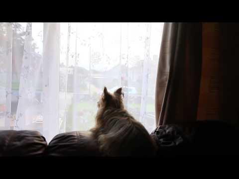 tiny the barking postman dog in wexford, ireland