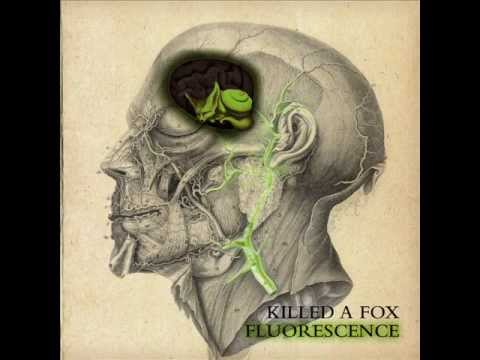 Killed a Fox - The Pattern (Fluorescence)