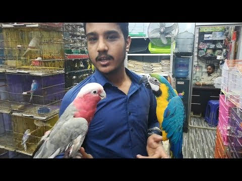 Visited At Galaxy Birds    Blue & Gold Macaw - Grey Parrot - Galah Cockatoo And Kittens