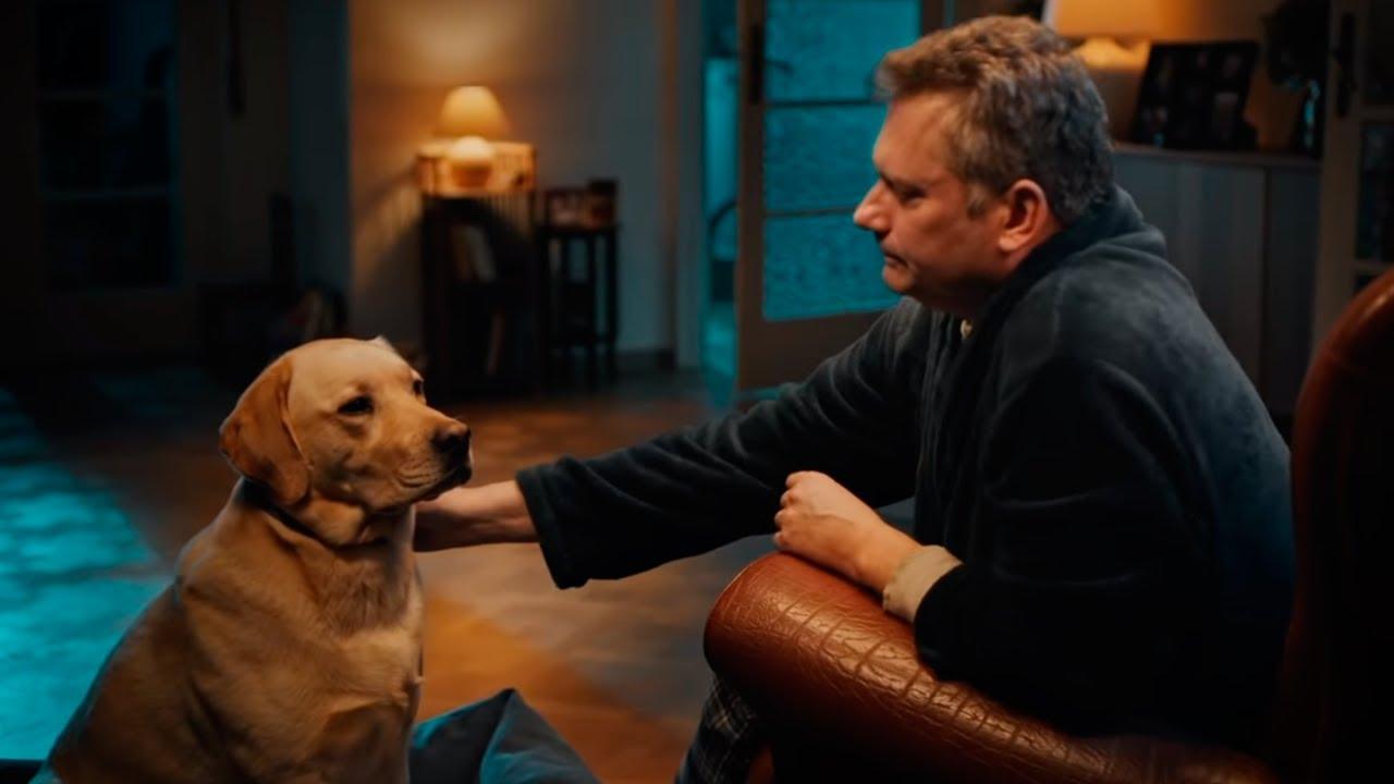 Collar antiparasitario para perros Beaphar Canishield