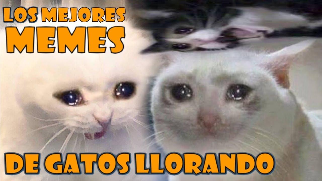 Los Mejores Memes De Gatos Llorando Memes De Gatos Parte 1 Youtube