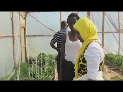 Kenya, L'agriculture connectée: La révolution agricole