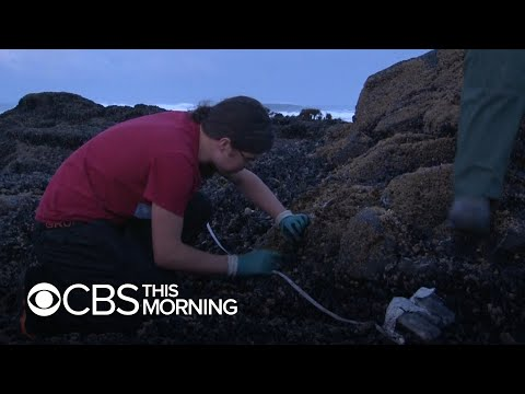 """Microplastics """"washing right out into the ocean,"""" marine biologists say"""