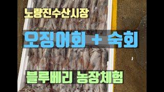 노량진수산시장 오징어회 구독자님 파주블루베리농장 웰빙팜