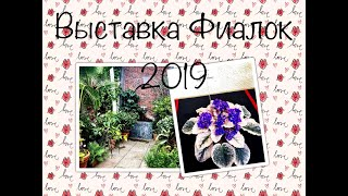 Выставка Фиалок/African violet Show in Boylston MA USA