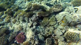 Sharm el Sheikh Red sea Hilton Sharks bay Egypt