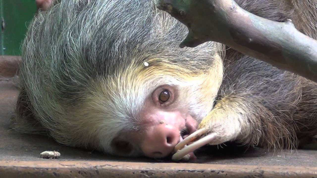 Cute Sloth Montage - YouTube