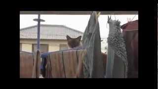 топ 5 Смешные падение кошек. Видео подборка. funny cats