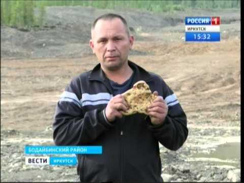 """Рекордно большой золотой самородок нашли в Бодайбинском районе, """"Вести-Иркутск"""""""