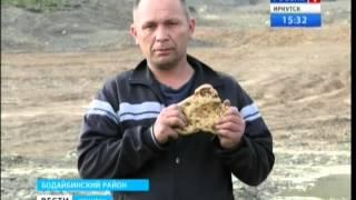 Рекордно большой золотой самородок нашли в Бодайбинском районе, 'Вести-Иркутск'
