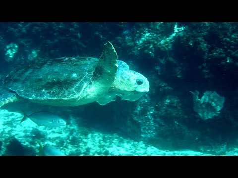 Studying Marine Science and Management at Southern Cross University