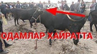 Махсус Видео Мол Бозордаги ХОЛАТ