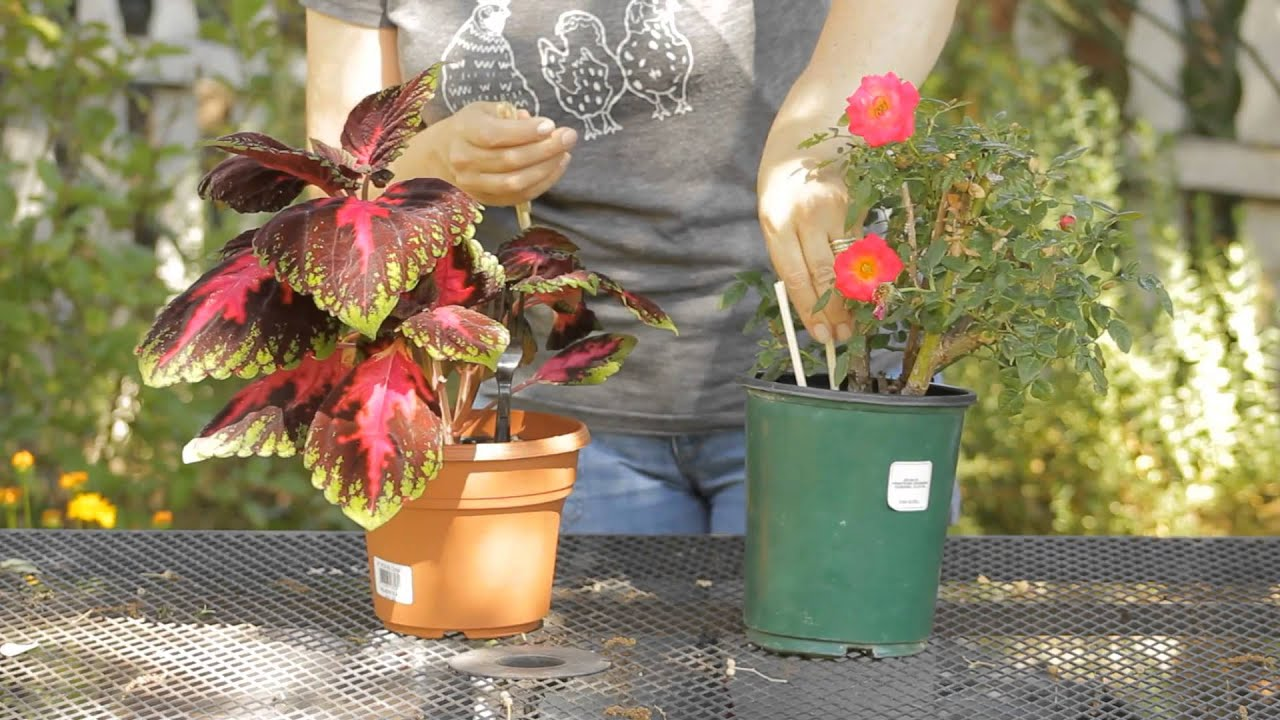 How To Keep Critters Out Of Flower Pots Garden E